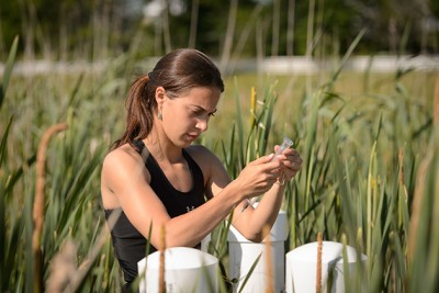Emily McInerney '15 (CAHNR) takes air samples from wetland plots near the Kellogg Dairy Center on June 24, 2014